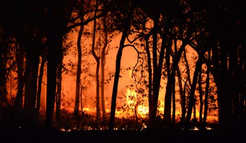 Los bosques se convierten en humo: los incendios de California ponen de relieve los peligros del uso de los bosques para la compensaciónde emisiones